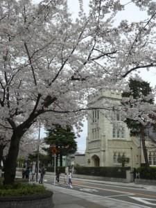 minamisakikaho-sakura-6