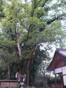 minamisakikaho-yamanashi-11