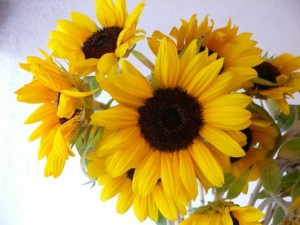 minamisakikaho-flower-8