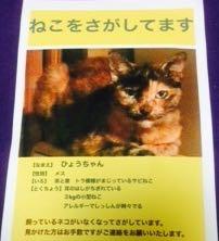 minamisakikaho-cats-2